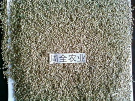 朝牧一号稗子种子