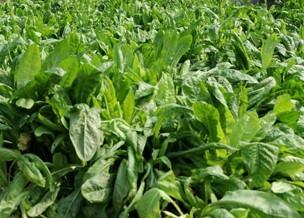 牧草种子的田间管理技术,你学会了没?