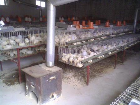 鸡笼厂供应育雏笼|小鸡笼|育雏鸡笼