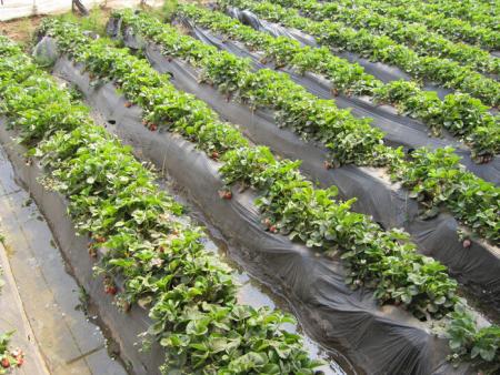 蔬菜专用膜|广西易胜博体育厂家|大棚农业蔬菜膜