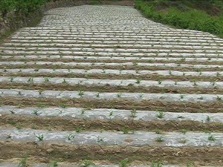 南宁温室蔬菜专用膜 蔬菜易胜博备用网址推荐