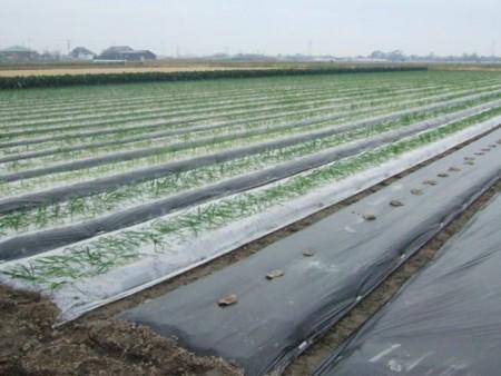 出售塑料薄膜 农用蔬菜专用膜