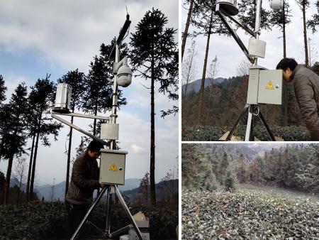达州渠县四川秀岭春天农业发展有限公司茶园|农业小型气象站|监测系统