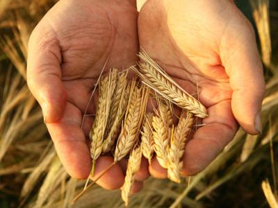 亚搏娱乐肥|冲施肥|菌肥|微生物肥-山东省远东肥料科技股份有限公司