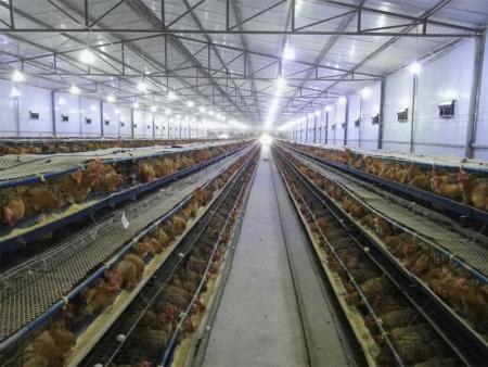 遂宁市川珂养殖合作社|智能家禽养殖温湿度监控系统