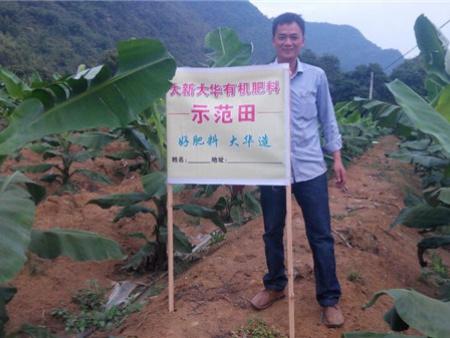 案例:香蕉示范种植基地