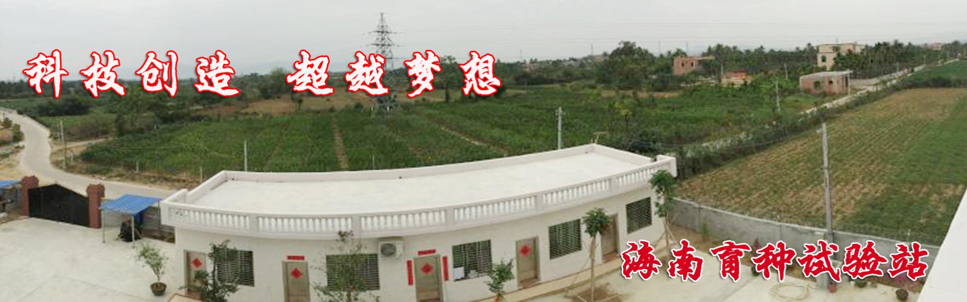 大豆种子品种