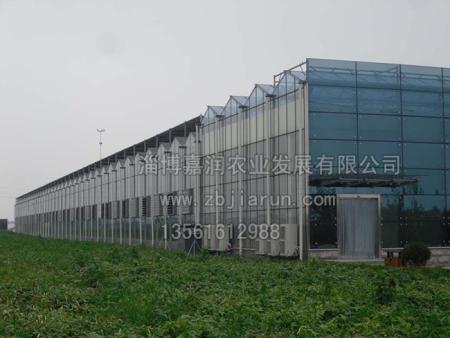 连栋雷电竞下载工程建造是以玻璃为主吗??