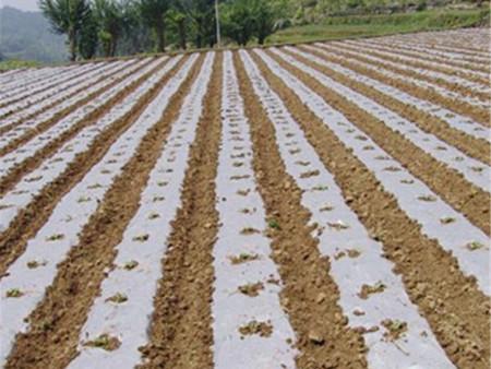 玉米万博manbetx官网地址覆盖栽培技术