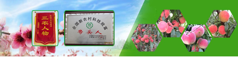 桃苗新品种