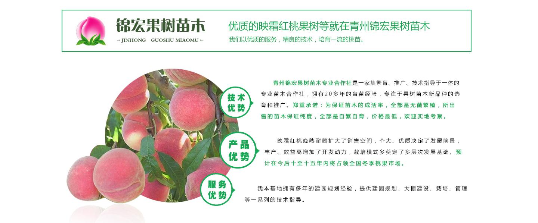 青州桃苗基地-青州锦宏果树苗木专业合作社