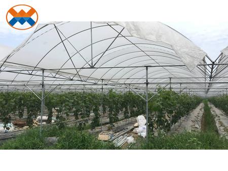 成都金房生态农业有限公司|大邑县葡萄种植园|大棚温湿度监控系统项目