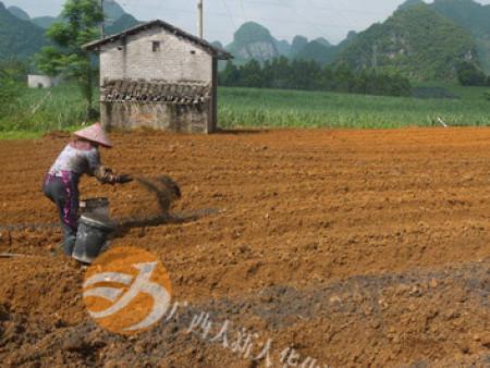 姜种植基地