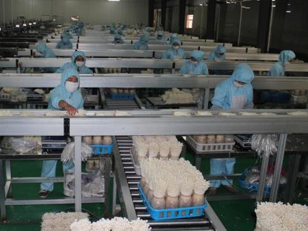 甘肃临泽县大力发展食用菌工厂化生产