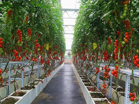 如何强化科技创新为农业转方式插上翅膀