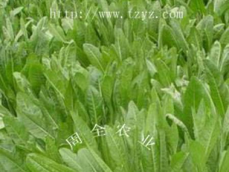 牧草种子在中国的发展史