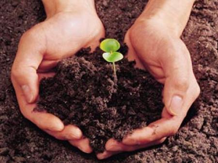 蔬菜种植应先如何土壤