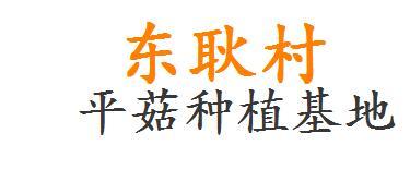 河南省辉县市赵固乡平菇种植基地