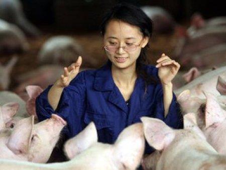 猪夏季饲养管理与疾病防治要点