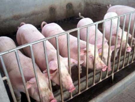 常见猪病的诊断和防治