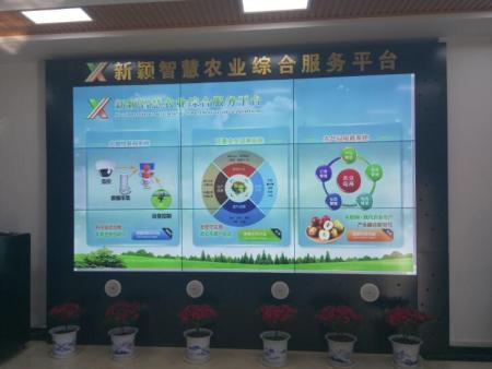 热烈祝贺大荔县智慧农业物联网项目完成验收——【鑫芯物联】