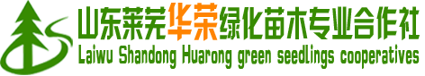 莱芜市华荣绿化苗木种植专业合作社