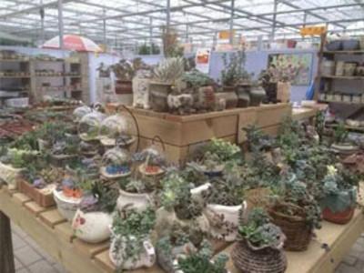 福州绿植公司_提供专业的花卉出租/租摆/租赁服务-福州花满园花卉有限公司
