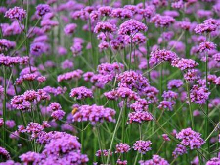 青州草花对环境的要求