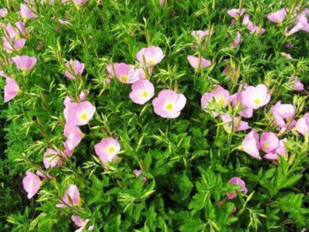 四季草花种植后要怎么培育