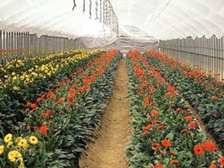 花卉专用膜