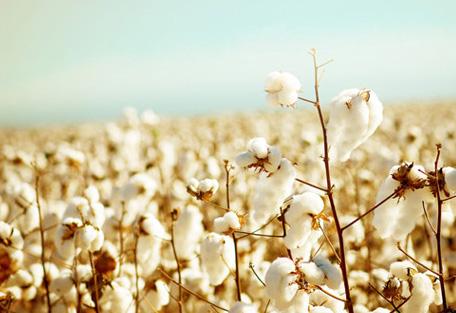 安阳九采罗:天然彩棉是什么?
