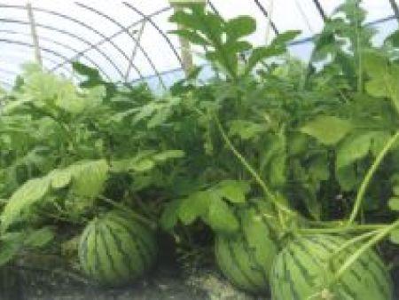 蔬菜专用膜