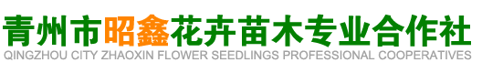 青州市昭鑫花卉苗木专业合作社