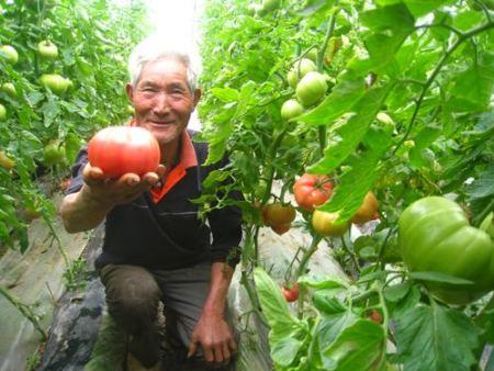 蔬菜专用肥