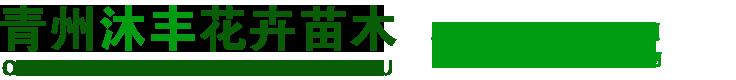 青州沐丰花卉苗木