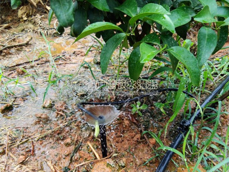 果树灌溉喷头