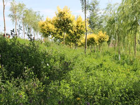 章子湖生态旅游区绿化