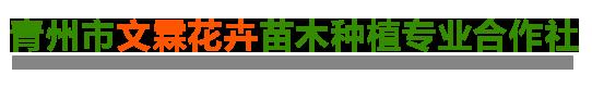 青州市文霖花卉苗木种植专业合作社