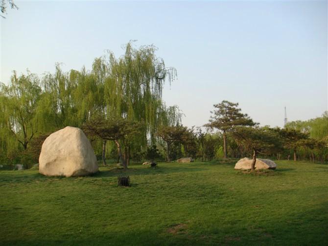 大型造型油松绿化效果