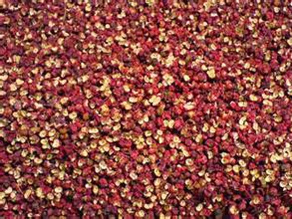 泰安大红袍花椒价格,花椒苗在播种后应该怎样进行管理!