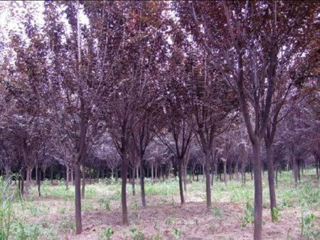 苗木种植施工过程中管理注意事项