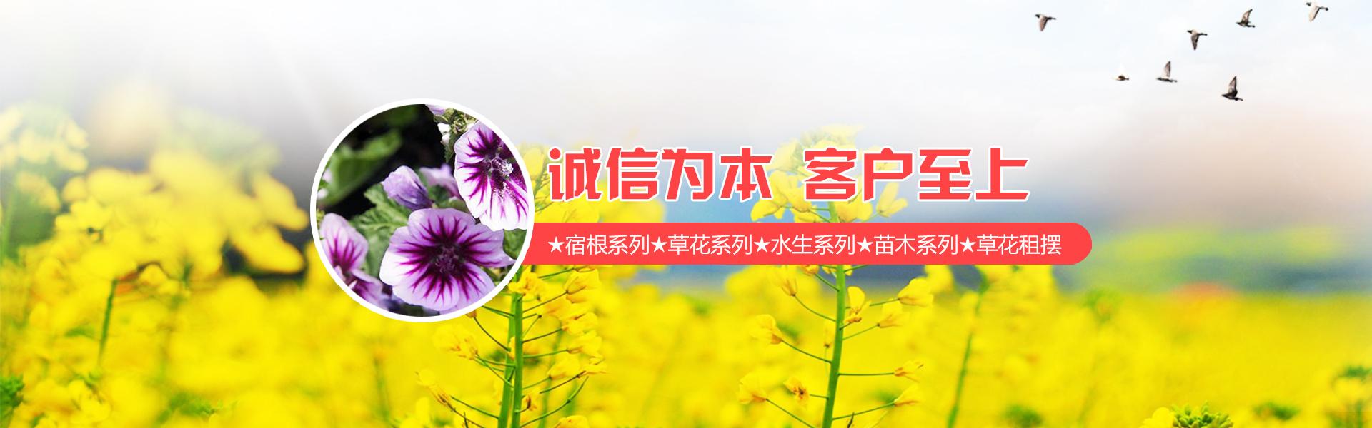 青州市鲁州顺诚花卉苗木有限公司