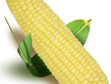 张家口鲜食玉米