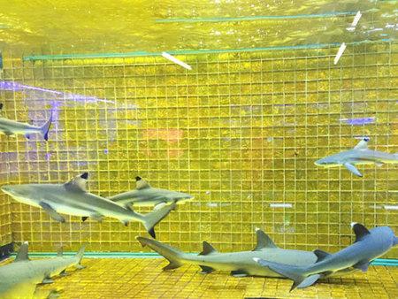 海洋生物展出租厂家浅谈生物多样性的价值