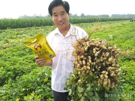 花生收獲季—花生種植戶使用果三多增產效果