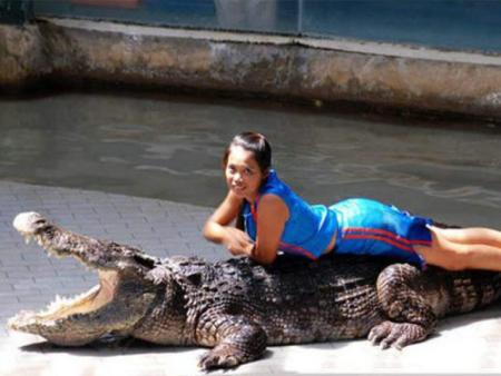 鳄鱼表演出租:如何做好鳄鱼养殖安全措施