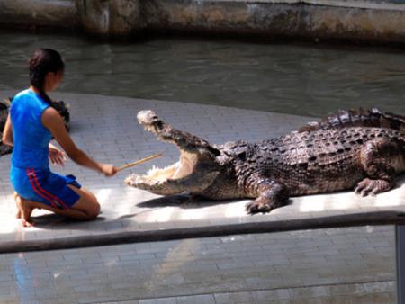 鳄鱼表演出租介绍鳄鱼对环境的适应性表现