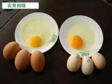 普通山鸡蛋和beplay官网注册山鸡蛋对比