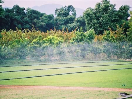 灌溉效果图