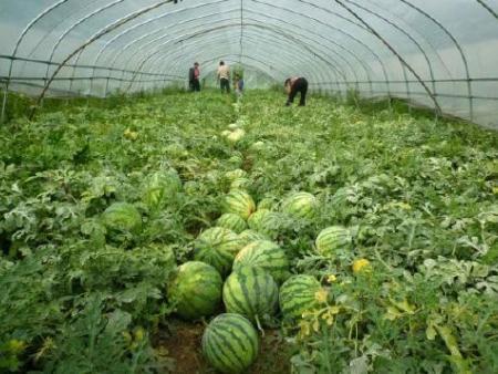 西瓜种植专用膜,南宁易胜博体育厂家